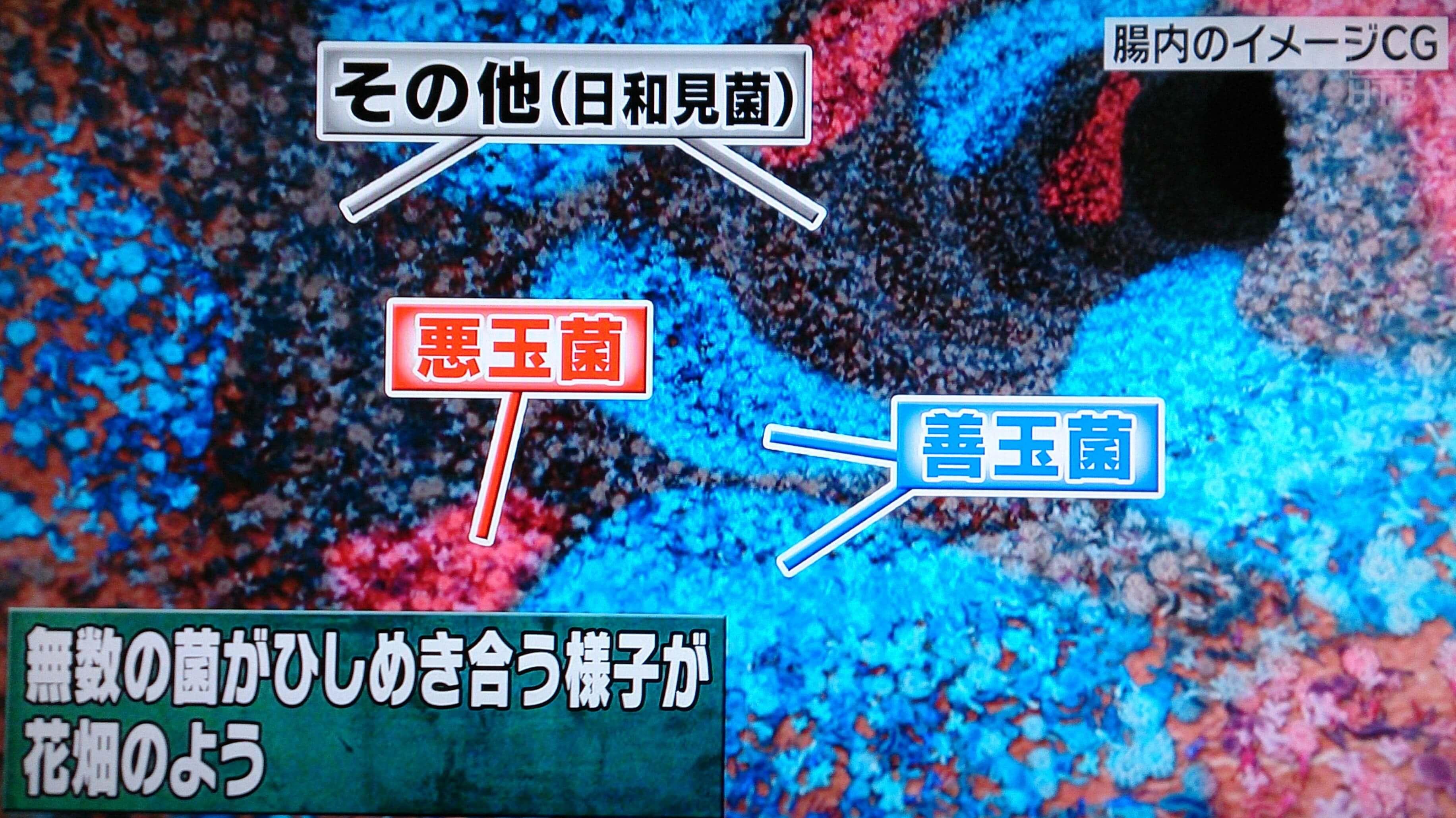 腸内フローラサプリにて改善する腸内フローラのイメージ
