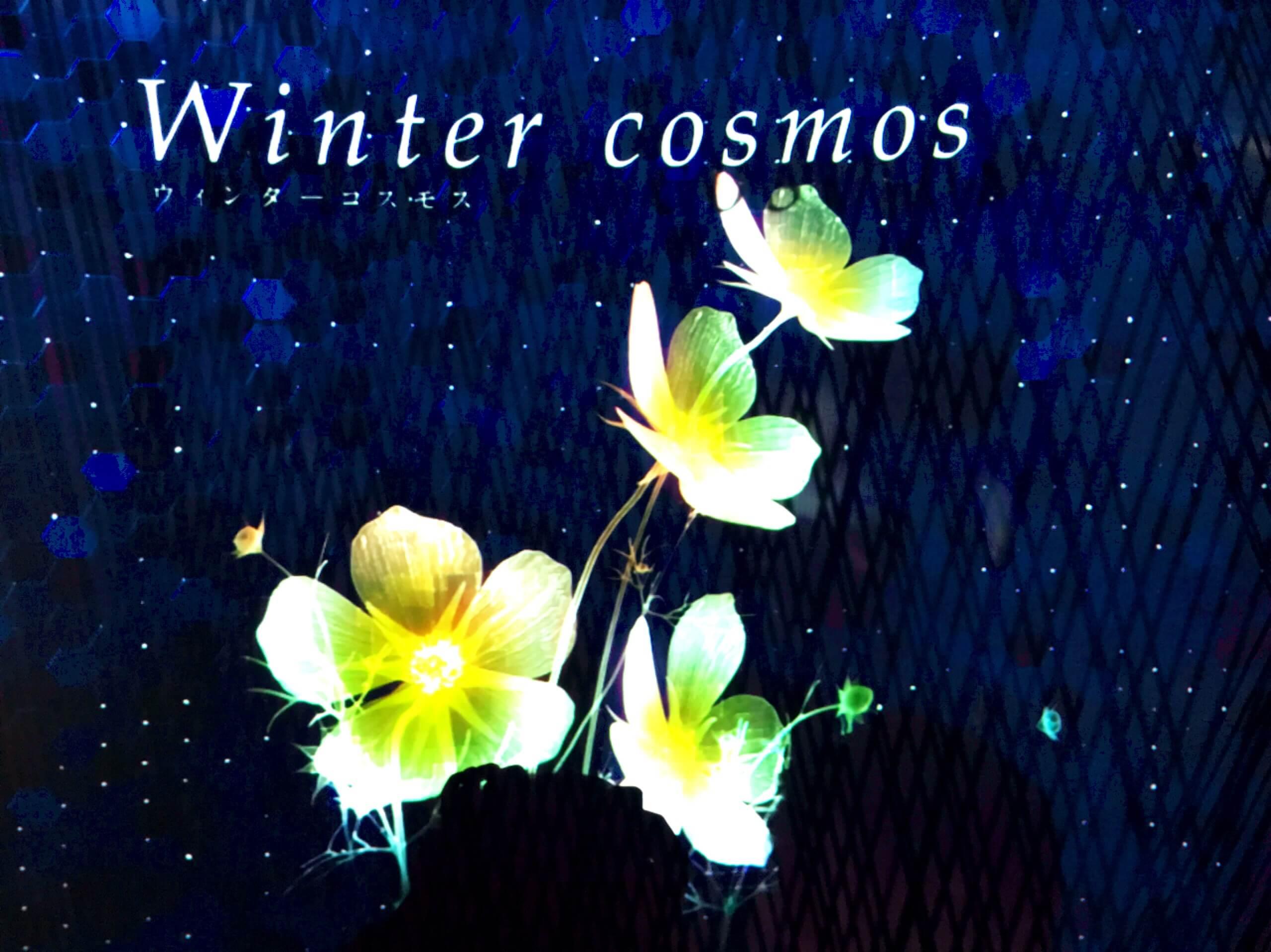 WinterCosmos