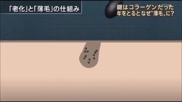 薄毛原因はコラーゲン(報ステ).mp4_000087088