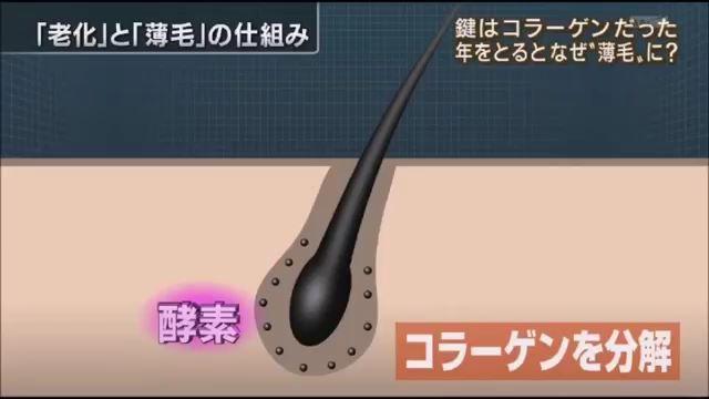 薄毛原因はコラーゲン(報ステ).mp4_000077056