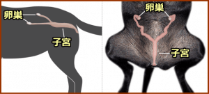sterility-female