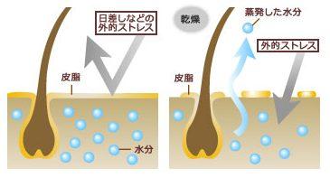 頭皮紫外線対策にて水分量が減った頭皮の状況