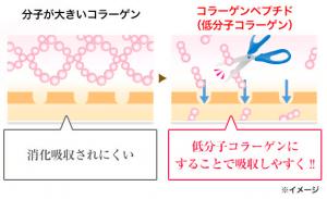 コラーゲンとコラーゲンペプチドの比較図
