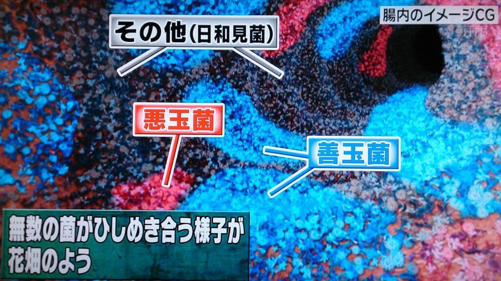乳酸菌サプリランキングの前に知っておきたい腸内フローラの図